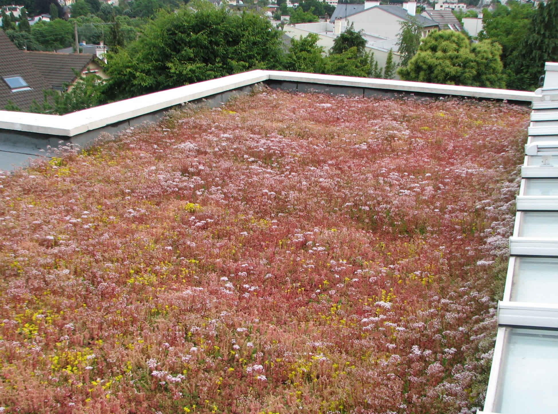 création toiture végétalisée maison